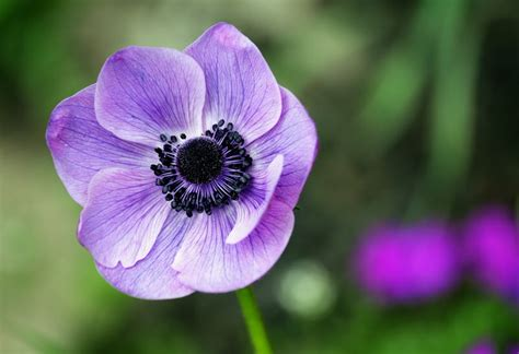 Top 10 Beautiful Flowers in the United States - The