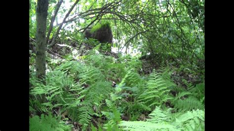 Find the Sniper Ghillie Suit 2 - YouTube