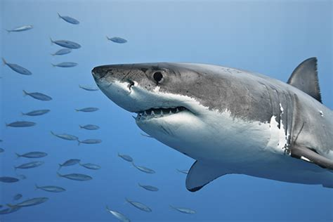 OCEARCH and Chris Fischer Programs and Events Calendar