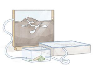 My First Ant Colony – Antkeepers