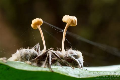 Ant Parasites – Antkeepers