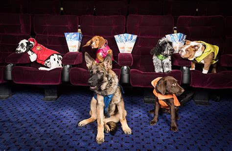 Paw Patrol characters come to life at dog Big Screen