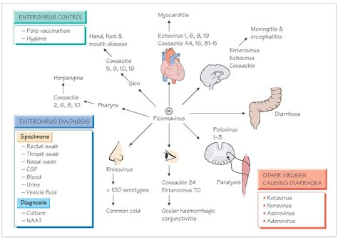 Enterovirus and viruses that infect the gastrointestinal