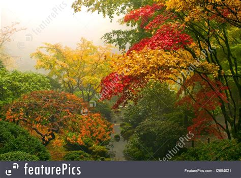 Photo Of Japanese Maple Trees In The Fall