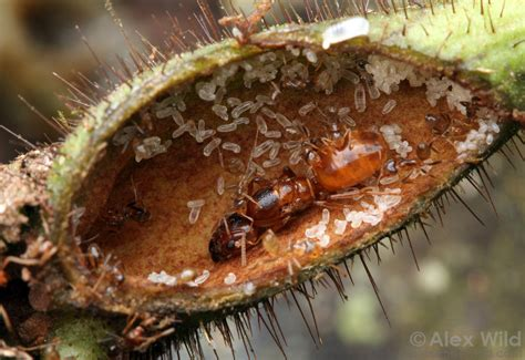 Ant Nests   The Ant Colony – Antkeepers