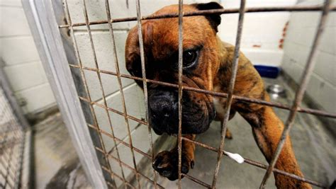 Ballarat council pounded over animal shelter contract
