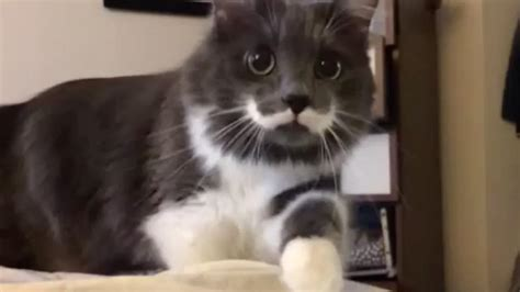 20 Cutest Dogs And Cats With Eyebrows, Beards, Or