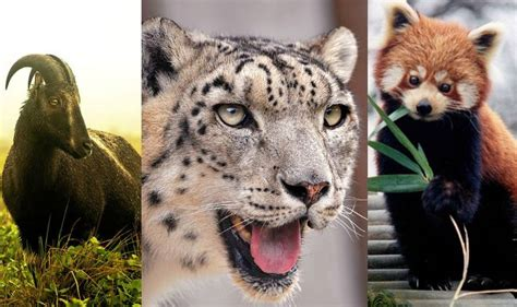 Do You Know Which Are The 21 State Animals of India?