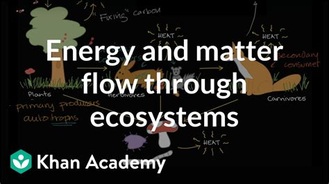 Flow of energy and matter through ecosystem | Ecology