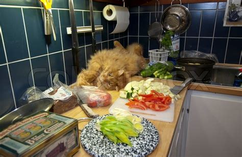 Cat in the kitchen while cooking,