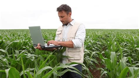 Agronomist Analyzing Cereals With Laptop Computer Stock
