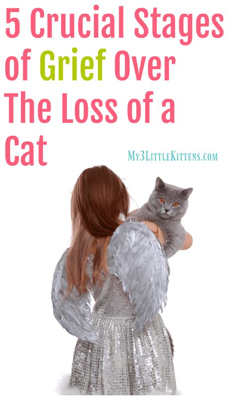 5 Crucial Stages of Grief Over The Loss of a Cat - My 3